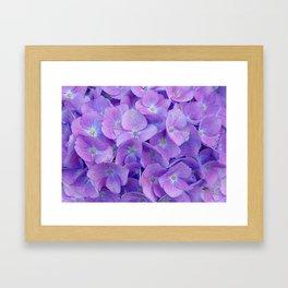 Hydrangea lilac Framed Art Print