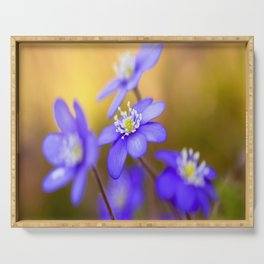 Spring Wildflowers, Beautiful Hepatica in the forest on a sunny and colorful background Serving Tray