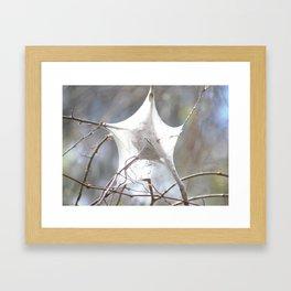 Bright White Star Shaped Caterpillar Cocoon Framed Art Print