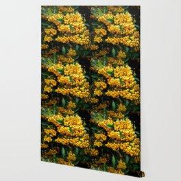 Firethorn Wallpaper