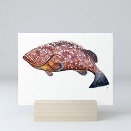 Dusky grouper or merou Mini Art Print