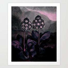 Dark Muted Pink Auriculas : Temple of Flora Art Print