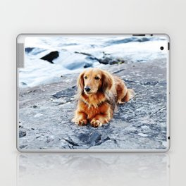 Red longhaired dachshund on waterfront cliff Laptop & iPad Skin