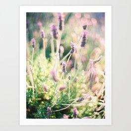 Lavender - Ibiza - Travel Photography Art Print