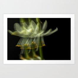 Blurring the flower Art Print