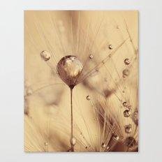 dandelion gold Canvas Print