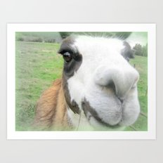 Friendly alpaca Art Print