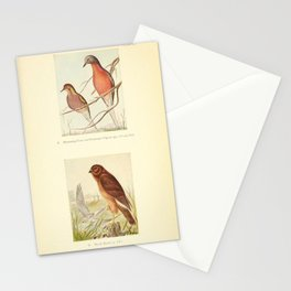 Mourning Dove Passenger Pigeon Marsh Hawk10 Stationery Cards
