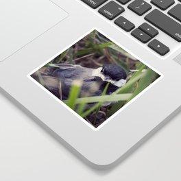 Baby Bird Sticker