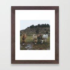Miniature Donkeys Framed Art Print