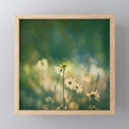 He Loves Me, Daisies Wildflowers Framed Mini Art Print