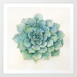 Succulent - Echeveria Art Print