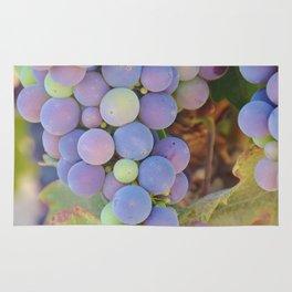 Vineyard Colors Rug