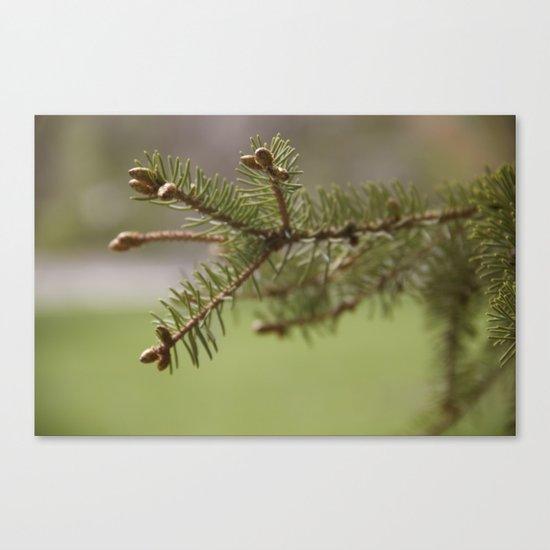 Baby Pinecones Canvas Print