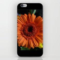 Orange Flower iPhone & iPod Skin