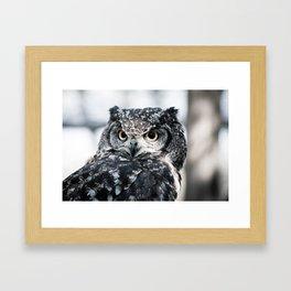 Spotted Eagle-Owl Framed Art Print
