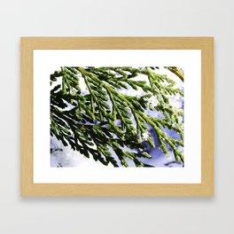Wintergreen Framed Art Print