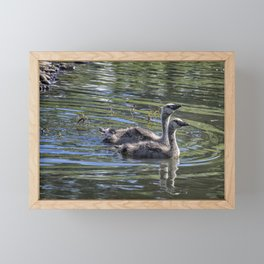 Two Goslings Taking a Swim, No. 2 Framed Mini Art Print
