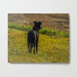 Watching dog Metal Print