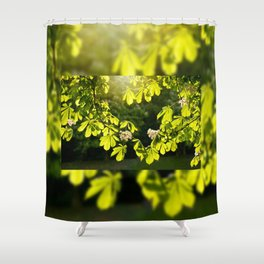 Flowering Aesculus horse chestnut foliage Shower Curtain