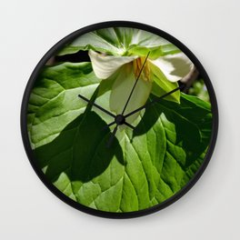 Shadow of a White Trillium Wall Clock