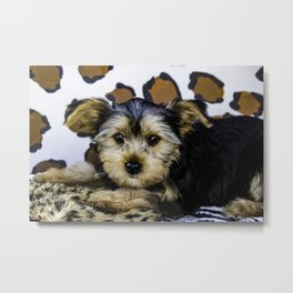 Yorkshire Terrier Puppy with Large Ears in front of a Leopard Print Background Metal Print