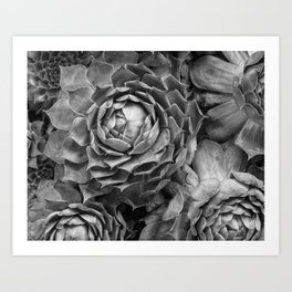 black and white succulents Art Print