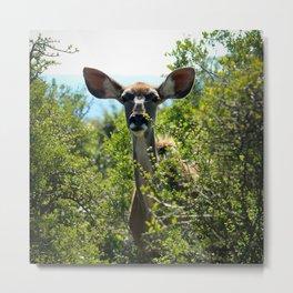 Kudu Buck Metal Print