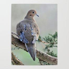 Gentle Dove Poster