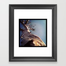 Wisdom That Touches the Sky Framed Art Print