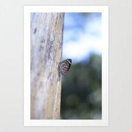 Butterfly 80 Art Print