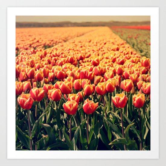 Tulips field #6 Art Print