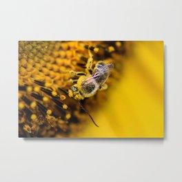 Bee enjoying a sunflower Metal Print