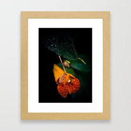 Jewel Weed in the early morning dew Framed Art Print