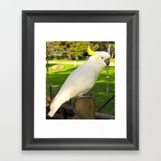 Yellow Crested Cockatoo Framed Art Print