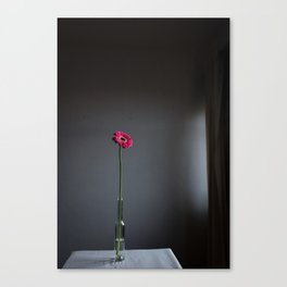 Pink Grace (Only 5 pieces) Canvas Print