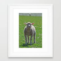 lamb Framed Art Prints featuring Lamb by  Alexia Miles photography