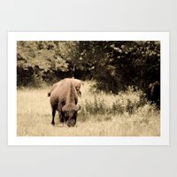 Bison Roaming the Great Plains Art Print