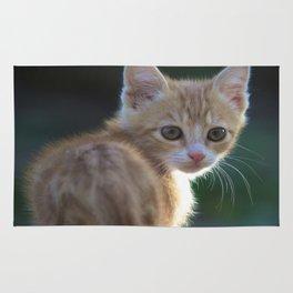 Gatto Rosso - Red Cat Rug