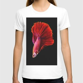 Siamese fighting fish T-shirt