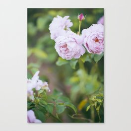 British Garden Roses Canvas Print