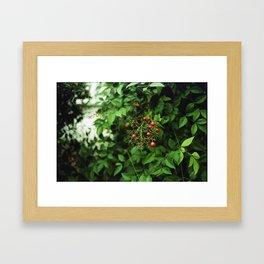 Poison Fruit Framed Art Print