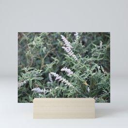 Flowering Sage Mini Art Print