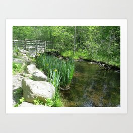SPRING GROWTH ON A STREAM Art Print