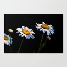 You're a Daisy Canvas Print