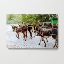 Donkey Team of Four Metal Print