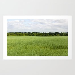 agricultural field of oat Art Print