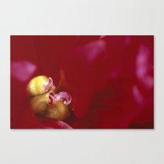 STAMEN OF PEONY Canvas Print