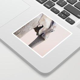 Animal Photography Elephant Portrait | Wildlife | Nature | Pink | Blush Pink Sticker