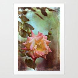 Rose 263 Art Print